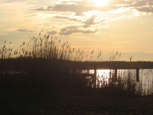 sun-and-reeds.jpg