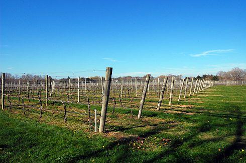 vineyard-spring